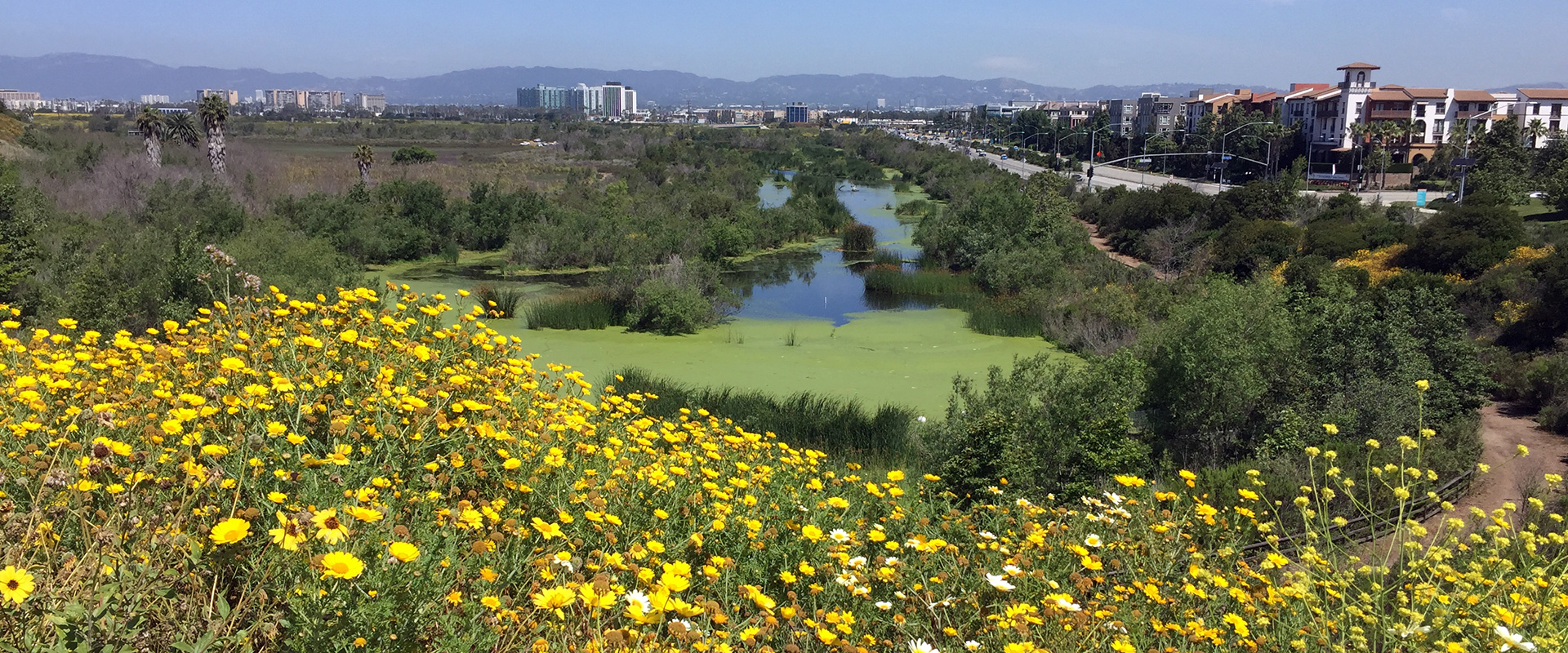 A scenic view of LMU and the neighboring Ballona Creek from a nearby trail with downtown Los Angeles in the distance