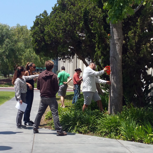 Students taking measurements of a tree on campus